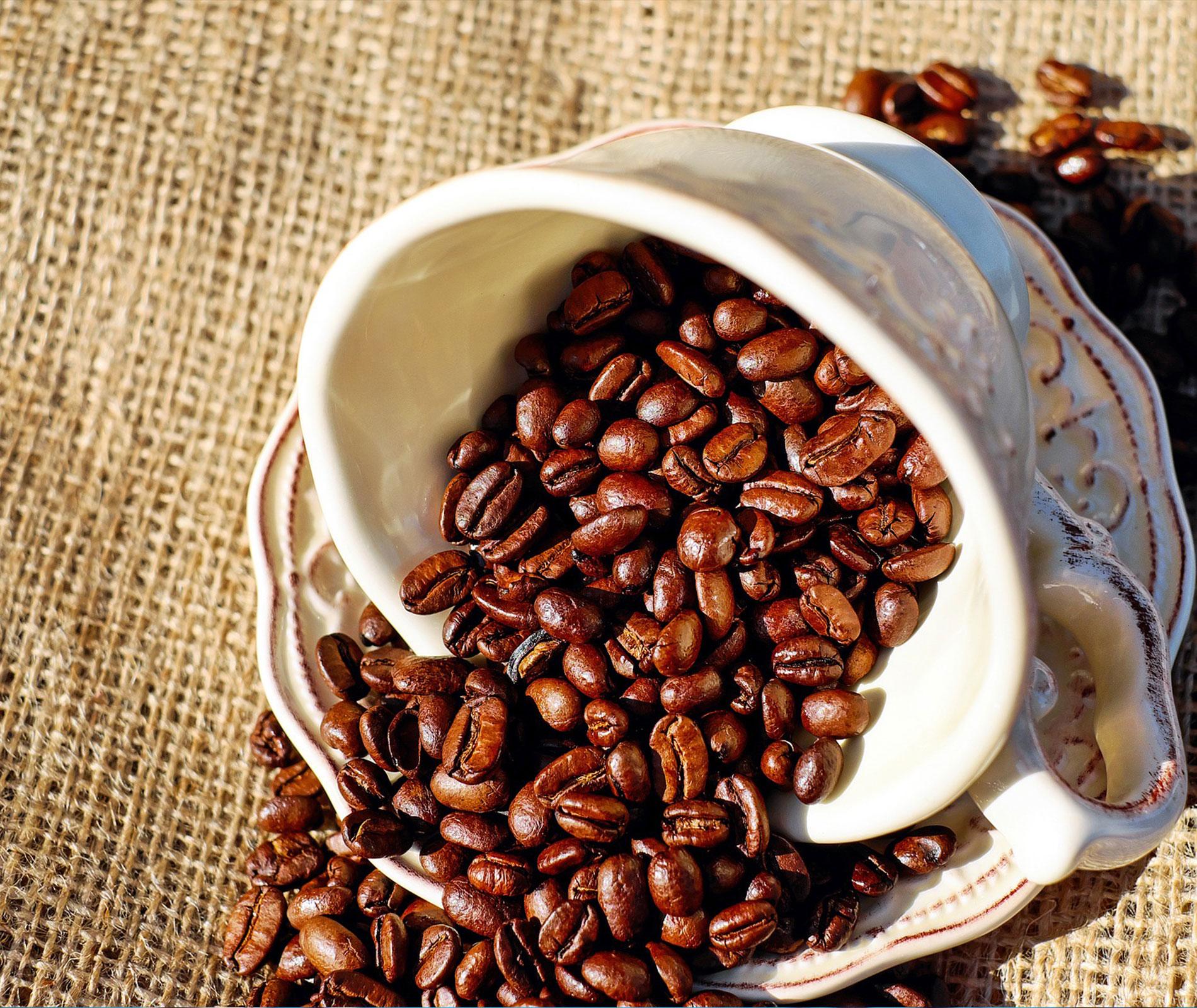 Breve storia del caff mondial casa - Pentole mondial casa opinioni ...
